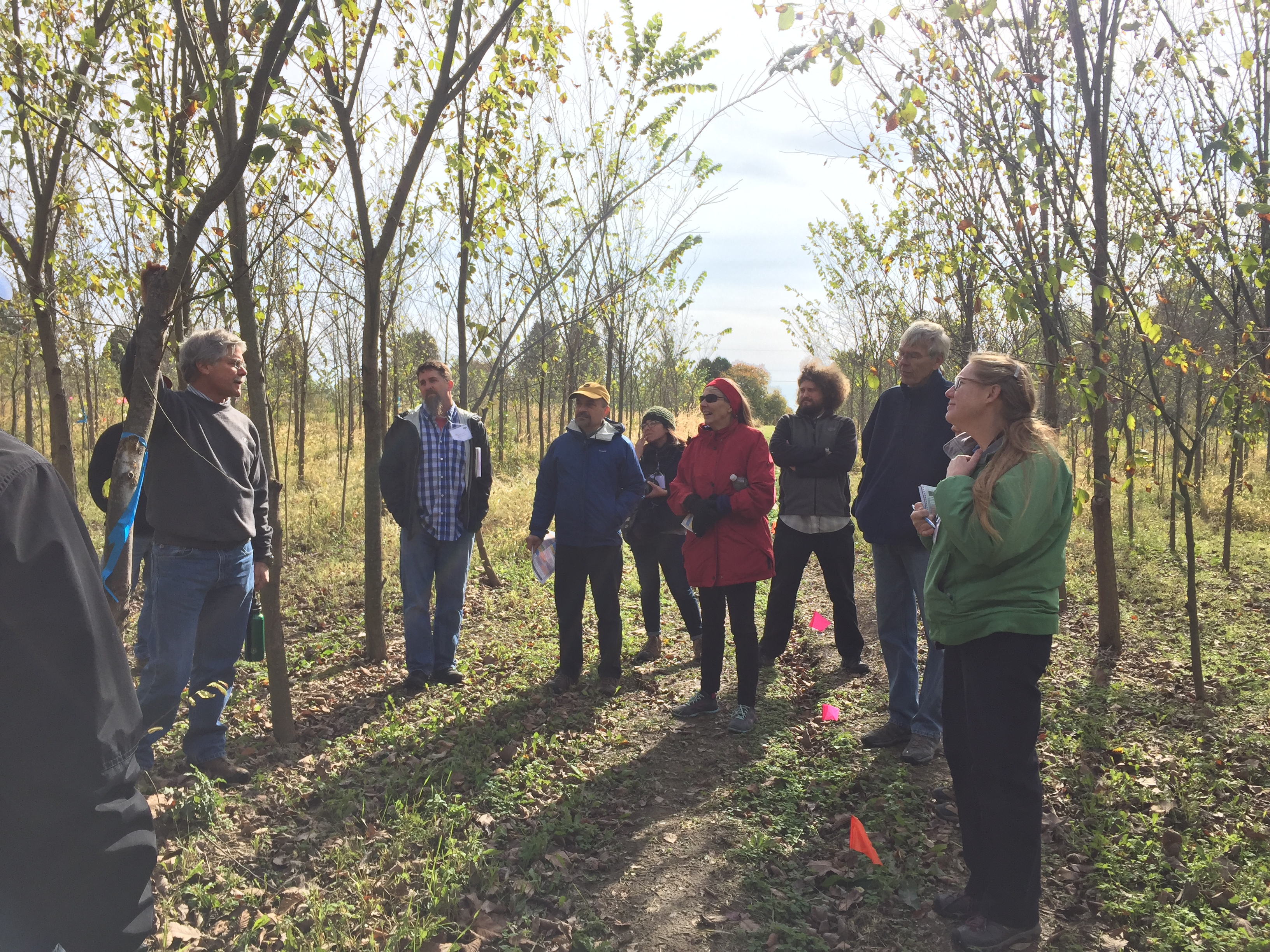 Group learning about Dutch elm disease