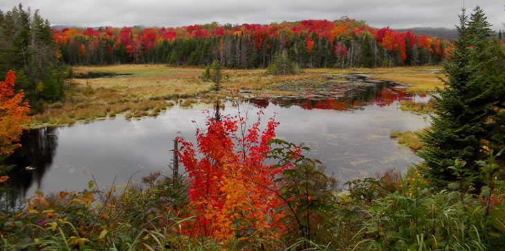 A scenic picture showing bright red leaves on trees both in the foreground and background with a small body of water in between.