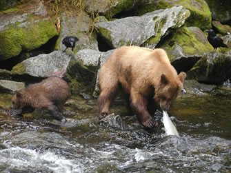 A photo of a brown bear and her cub fishing in a river.