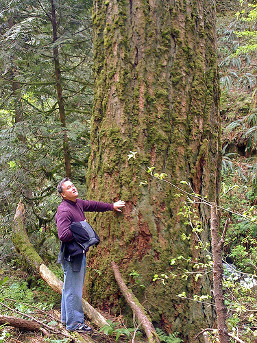 A forest visitor admires an old growth forest on the Mt. Hood National Forest. (U.S. Forest Service photo)