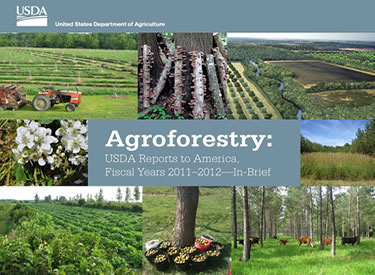 agroforestry cover