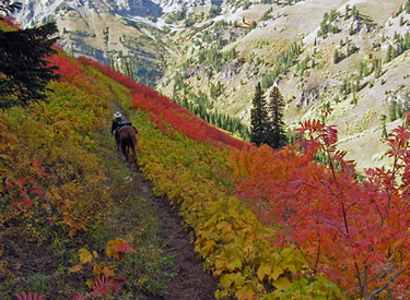 Visitors to the the North Fork Indian Creek, Palisades District can find Greene's mountain ash (Sorbus scopulina) and thimbleberry (Rubus parviflorus) ablaze in the fall on the Caribou-Targhee National Forest as shown in this September 2005 image. (U.S. Forest Service)