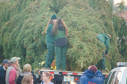 capitol christmas tree secure