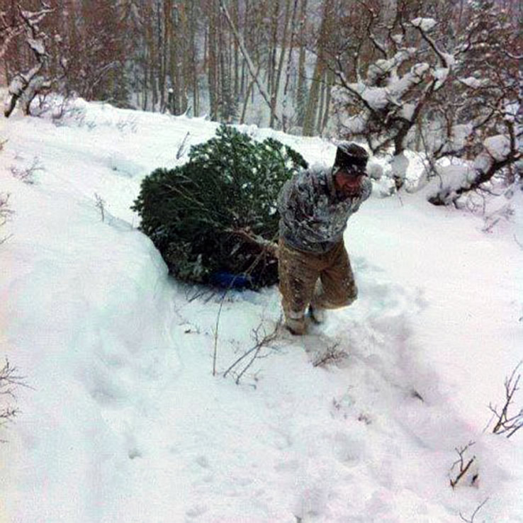 Tree Cutting | US Forest Service