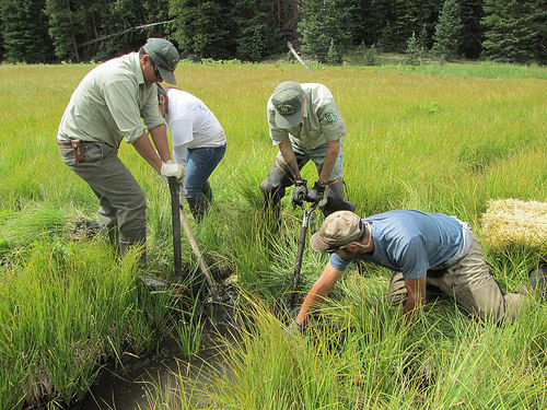 Forest Service employees prepare the channelized section of the fen for straw bale placement.