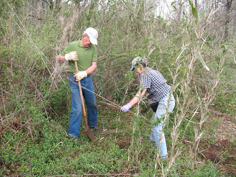 Forest Service partnered with the non-profit Chattooga Conservancy to restore giant cane (Arundinaria gigantean) along the Chattooga Wild and Scenic River in South Carolina.