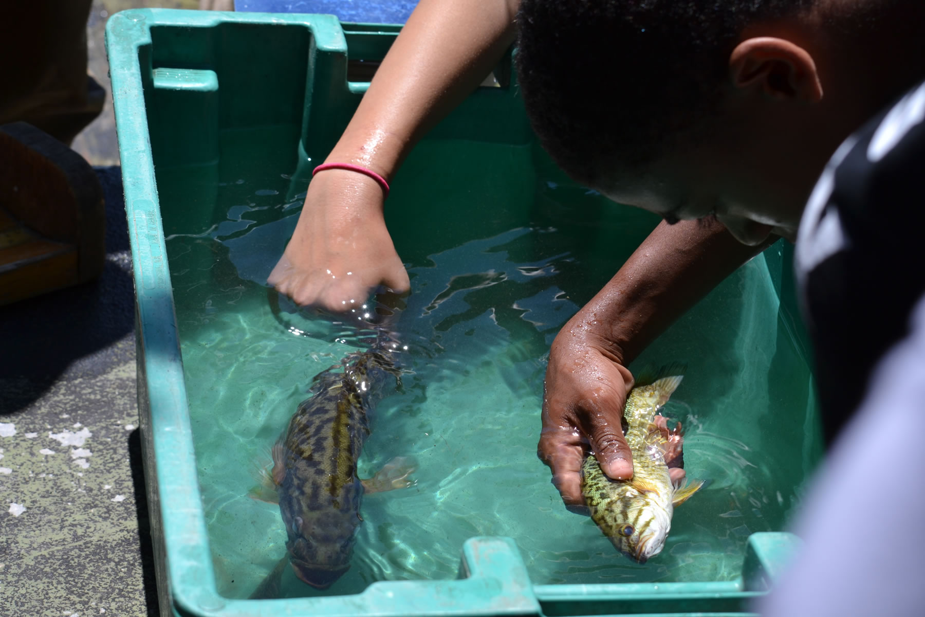 Young urban youth looking and touching live fish.