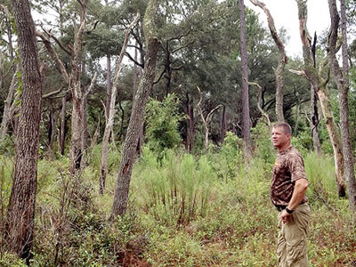 Steve Barlow looks over the longleaf pine forest on his property in Levy County, Florida.
