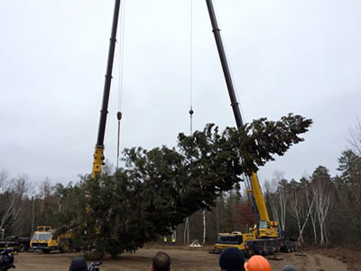 A photo of the 88-foot, 13,000-pound Minnesota spruce chosen as the 2014 U.S. Capitol Christmas Tree.