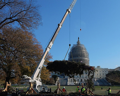 A photo of crane lifting a 88-foot spruce tree harvested from the Chippewa National Forest in front of the U.S. Capitol