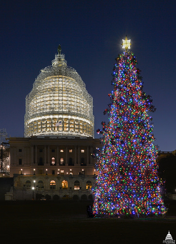 A photo of the 88-foot white spruce harvested from the Chippewa National Forest standing as the 2014 U.S. Capitol Christmas Tree