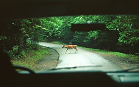 A photo of a deer crossing a rural road.