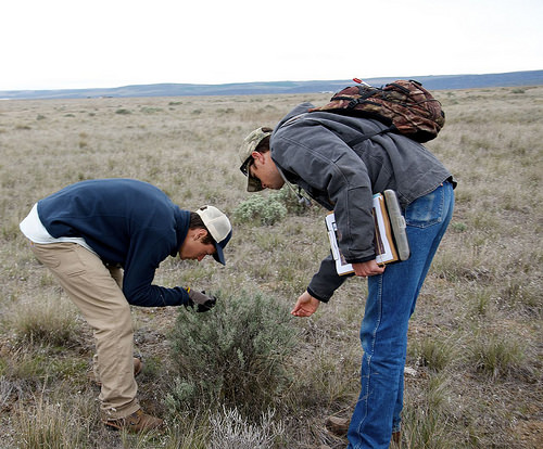 A photo of Clancy Jandreau and Michael Brown, with NRCS, conduct a range inventory as part of the Sage-Grouse Initiative.