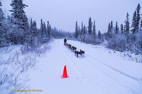 Musher Heidi Sutter and dog sled team approach the Sourdough checkpoint.