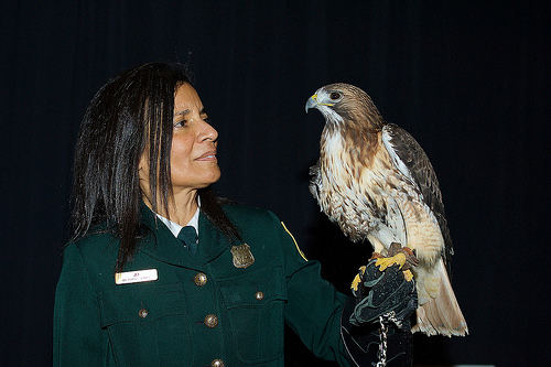 "Jo Santiago, a U.S. Forest Service Wildlife Biologist who educates the public on birds through live demonstrations, shows off a Red-tailed Hawk during the ""Wings Across America"" event. (Photo by Sean Kelley)"