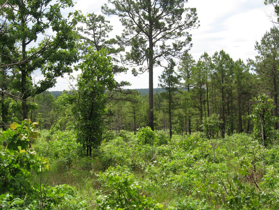 Many of Oklahoma's woodlands developed where natural or man-caused fires were essential in regenerating new trees, controlling invasive species and improving overall forest health. (USFS photo)