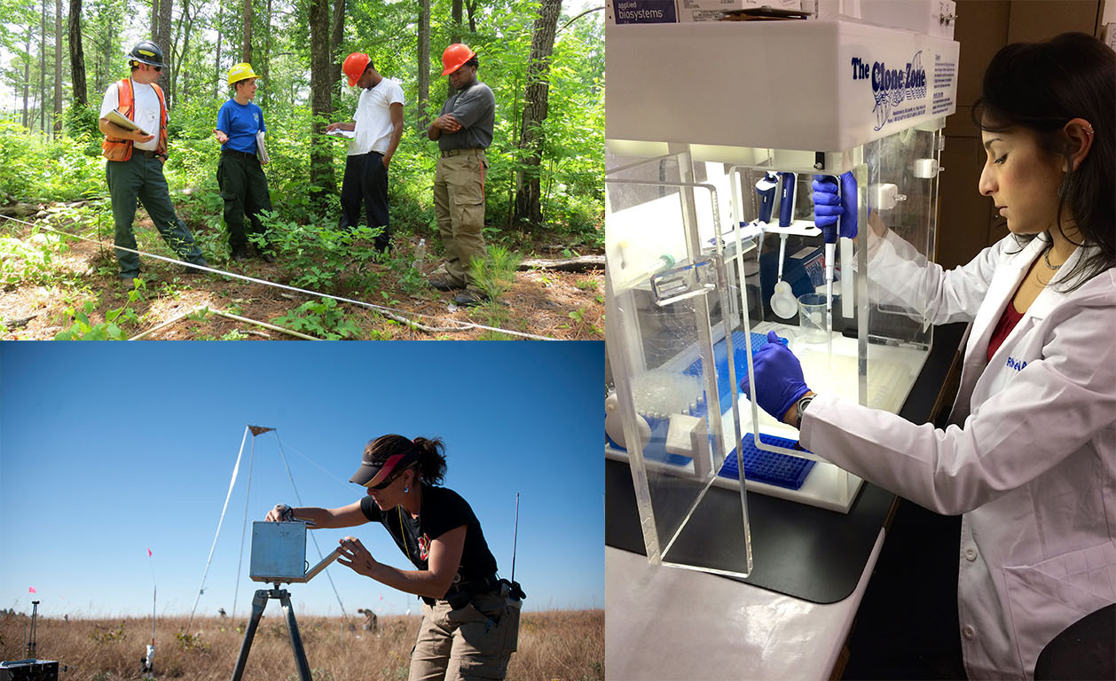 A collage showing different Forest Service researchers at work, conducting a site visit, wildfire research, and genetic analysis.