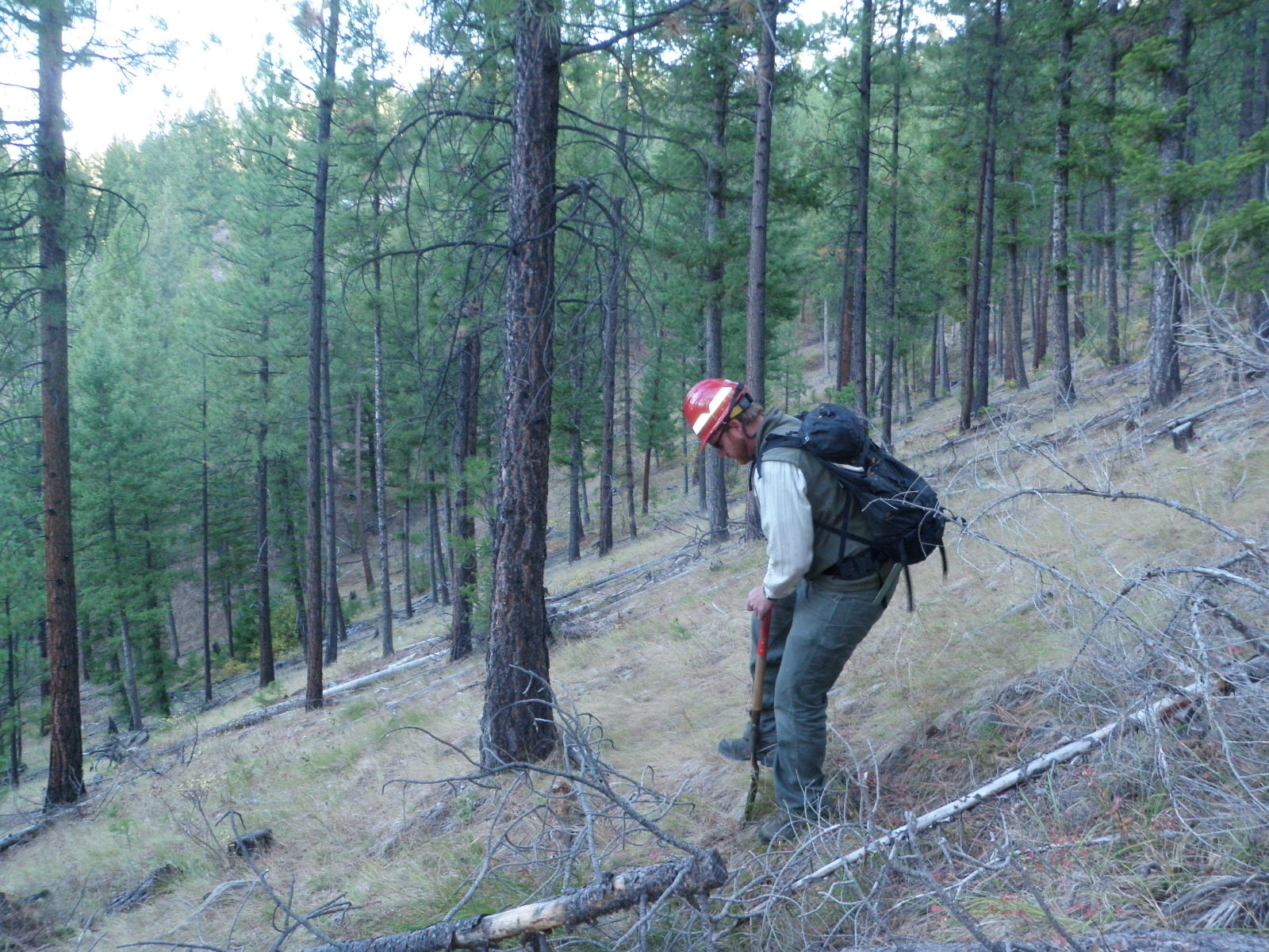 Challis National Forest Soil Scientist Jeremy Back monitoring forest soils (USFS Photo)