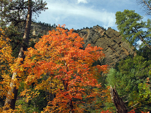 A photo of orange leaves and fall foliage in West Fork.