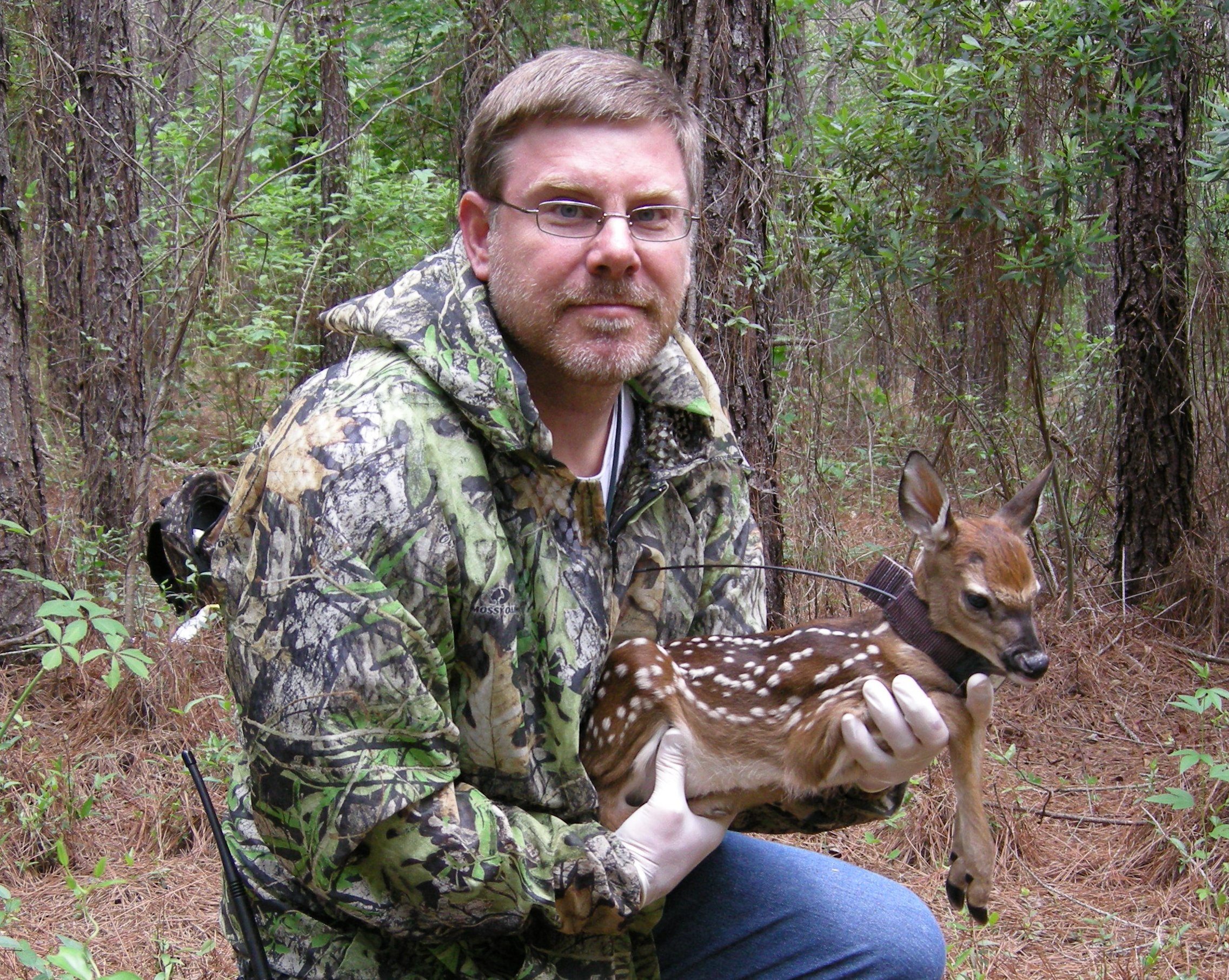 Study Concludes Coyotes Help Manage Deer Population in Southeast