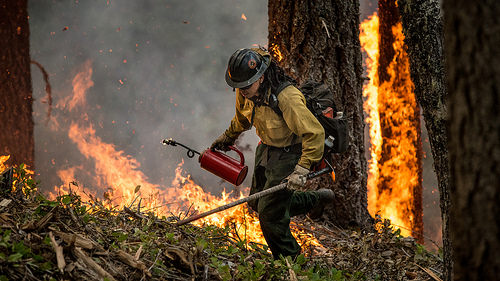 A photo of a firefighter on the San Juan Fire.
