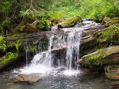 A photo of a stream flow from diminishing snowpacks in the Pacific Northwest.