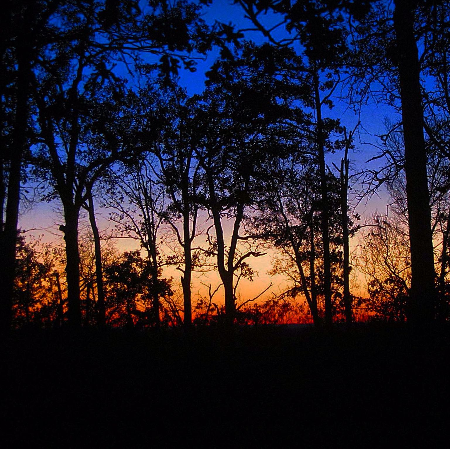 A picture of a colorful sunset with several trees in the foreground.