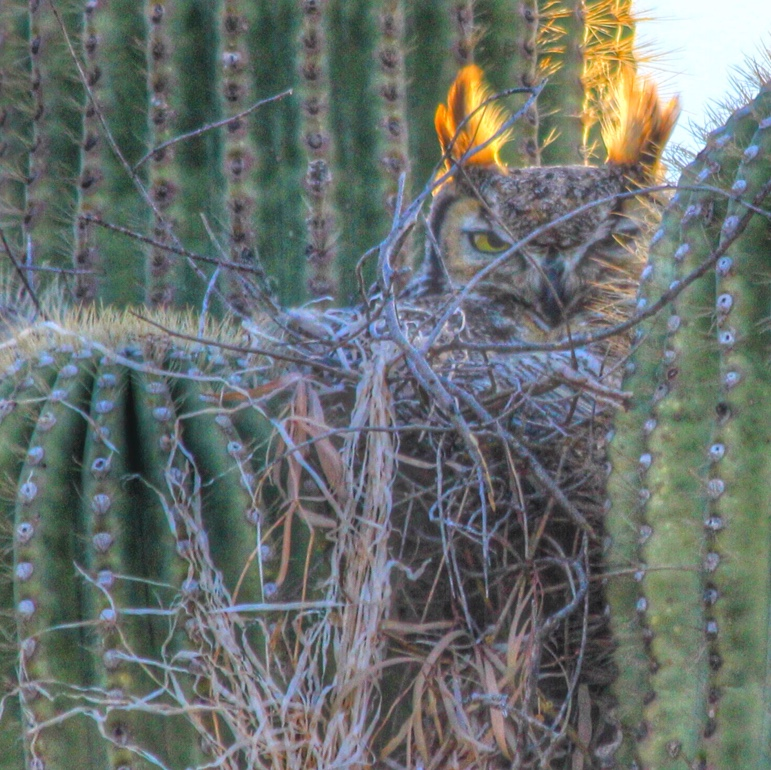 A picture with an owl perched on a large cactus.