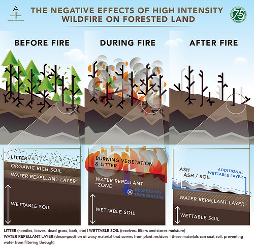 An illustrated photo of the negative effects of high intensity wildfire