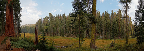 A photo of Log meadow in Giant Forest, Sequoia National Park