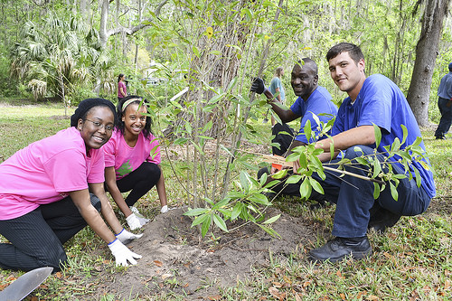 A photo of Students and staff from the University of Florida planting a tree