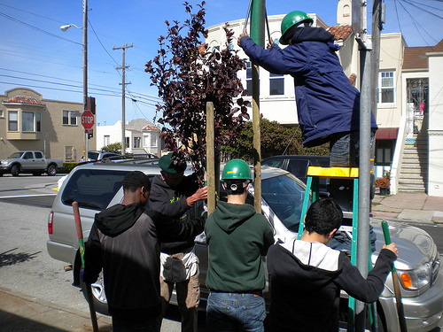 A photo of  Friends of the Urban Forest planting a tree in a neighborhood