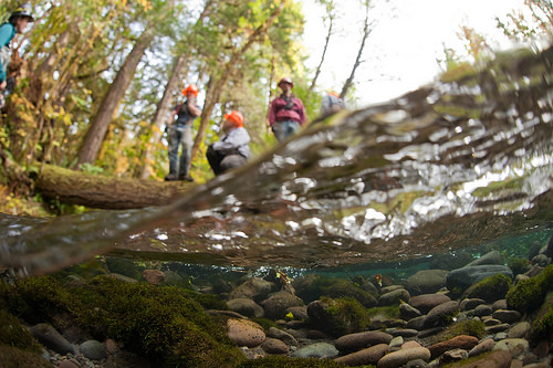 An underwater photo of  tree-tipping crew works in side channels of the river to pull streamside trees into the channel