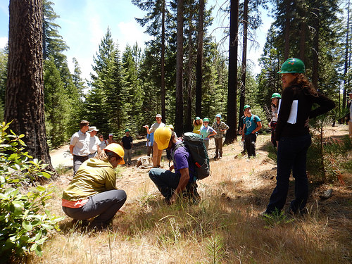 A photo of researchers on the Blodgett Experimental Forest in California