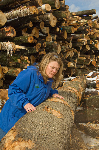 A photo of Retiring APHIS State Plant Health Director for Massachusetts inspecting ALB damaged wood in Massachusetts.