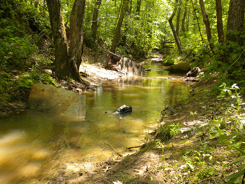 In some streams, trash is the largest and most stable cover available to crayfish.