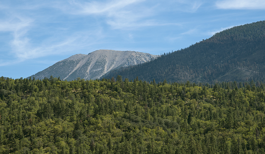landscape picture of forested mountains on the San Bernardino National Forest