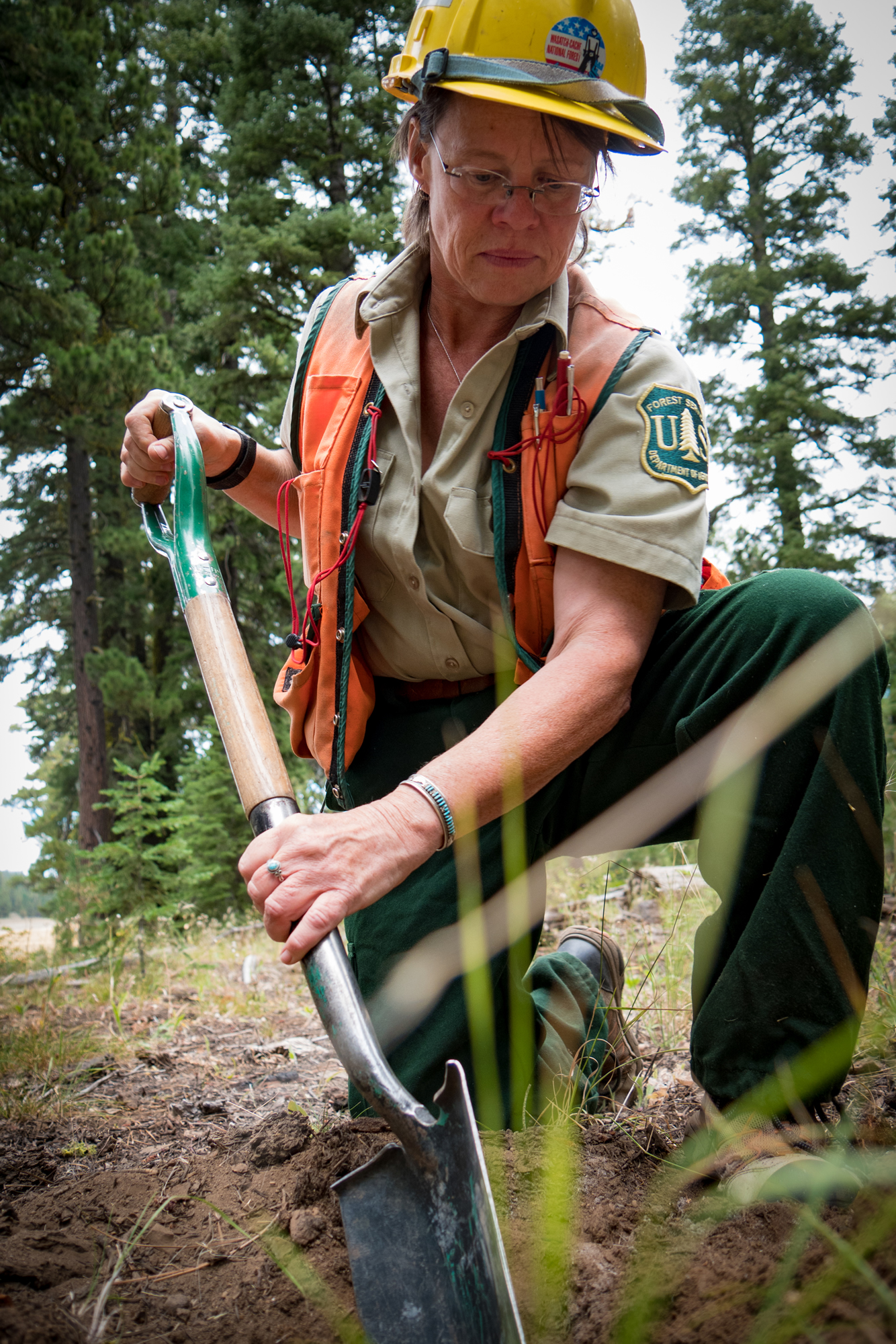 A picture of a Forest Service Ranger working in the field, using a shovel to make a small hole in the dirt.