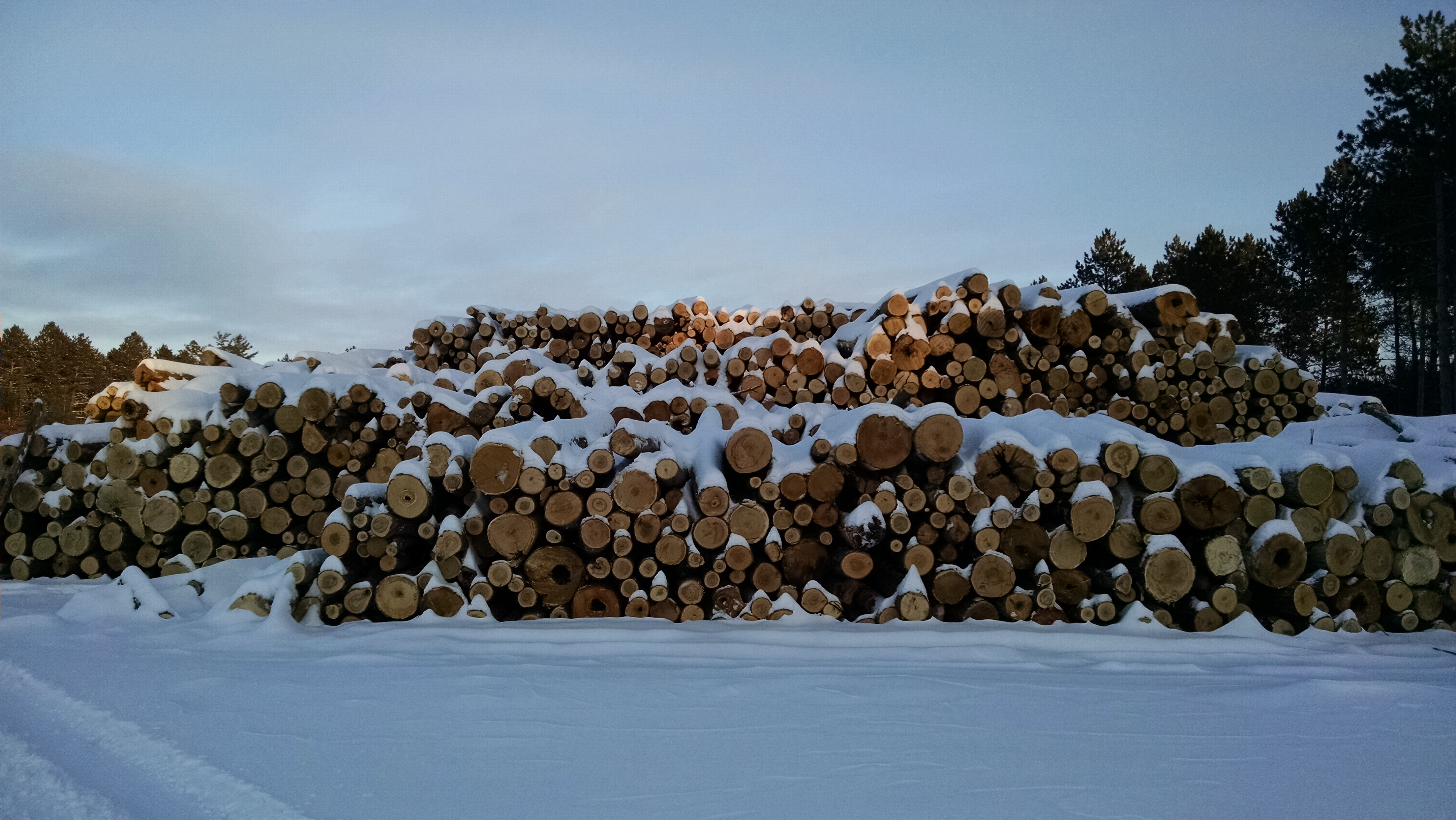 Photo: Stacks of salvaged logs piled in the snow