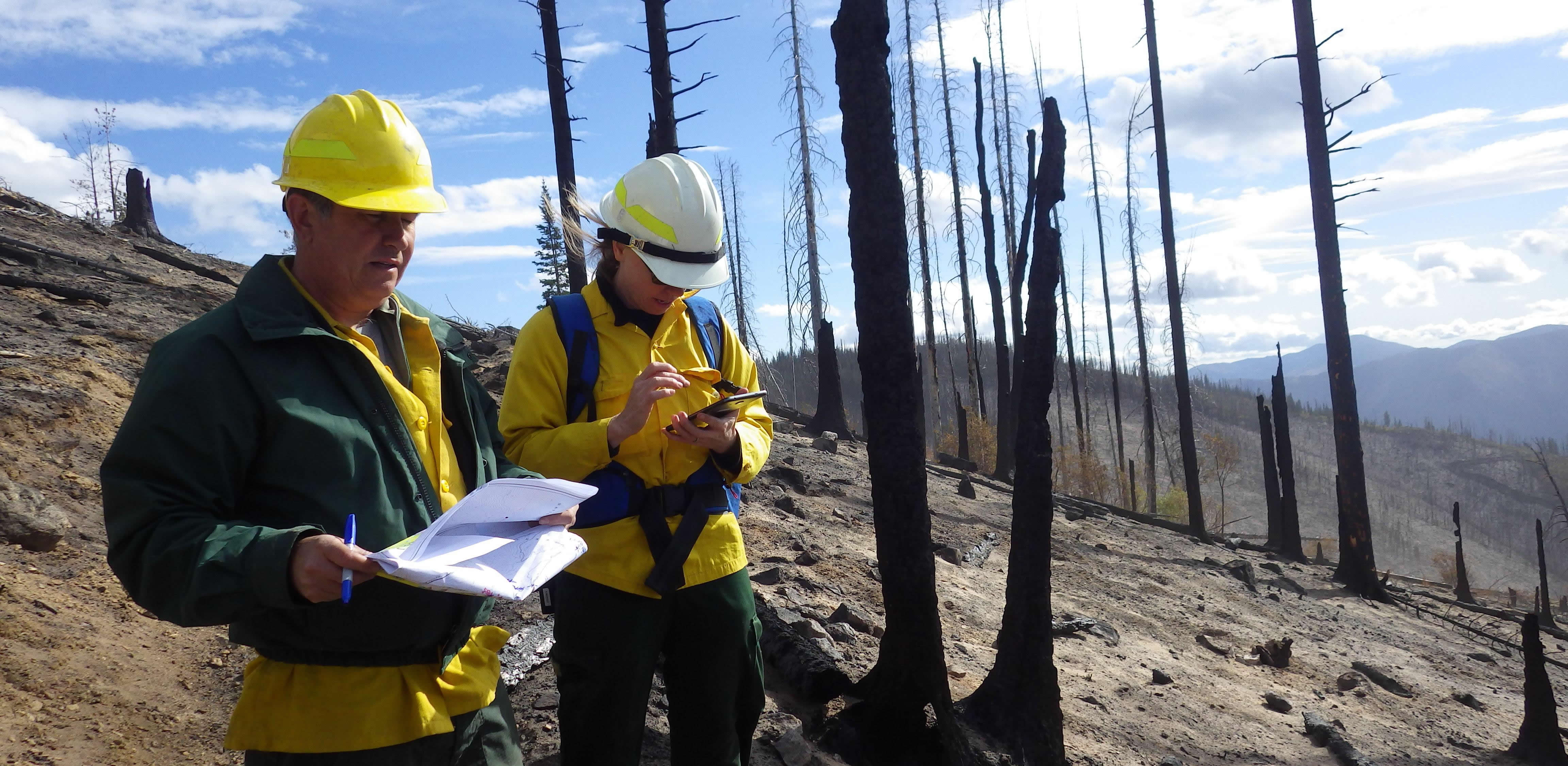 Two Forest Service employees working in an area long after a wildfire moved through.