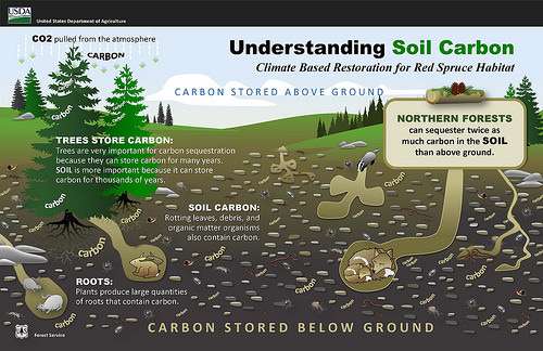 Understanding soil carbon graphic.