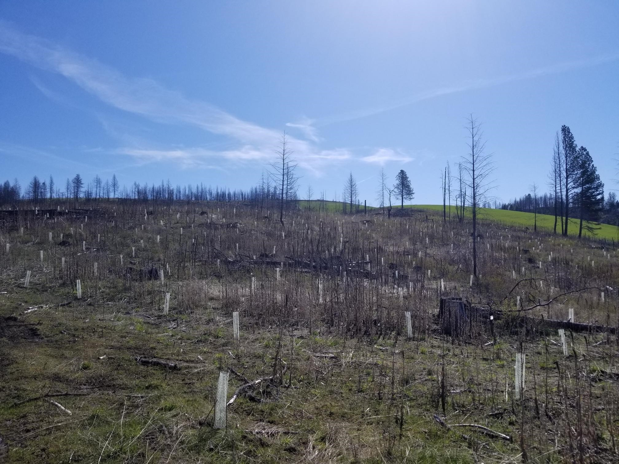 Fire Season Restoration