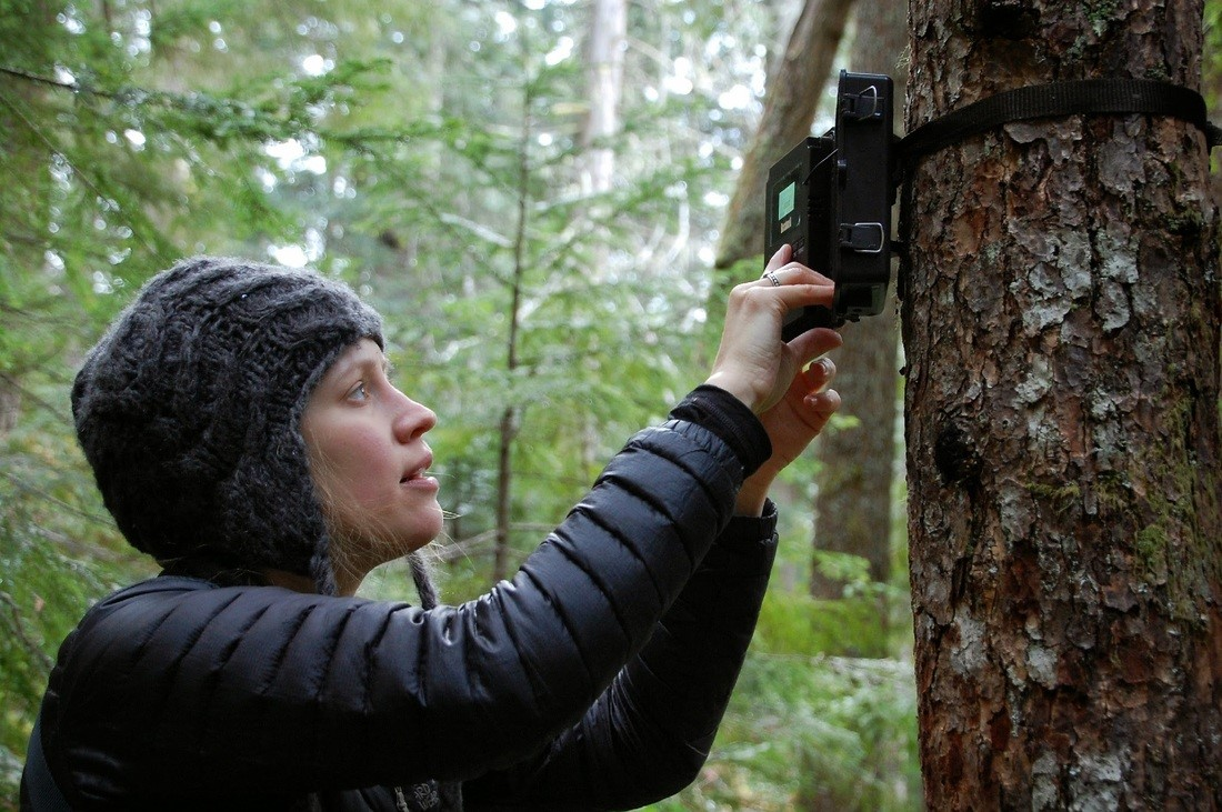Volunteer Angela Bohlke pulls the memory card from the trail camera to see if any marten photos were captured since their last visit.