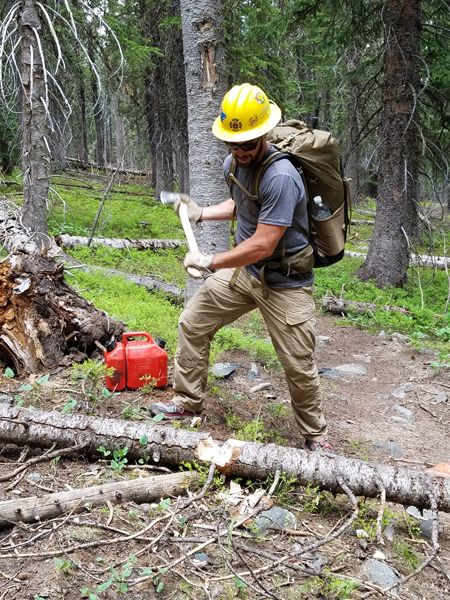 A picture showing a person chopping a fallen tree with an axe