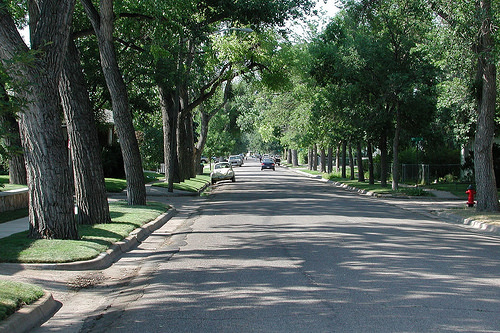 A photo of a neighborhood street with the sidewalks lined with large trees