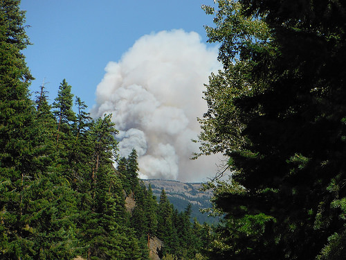 A photo of a  massive column of smoke rises from a forest fire