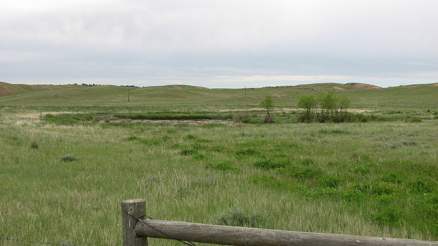 A picture showing a grassy field on the Thunder Basin National Grasslands.