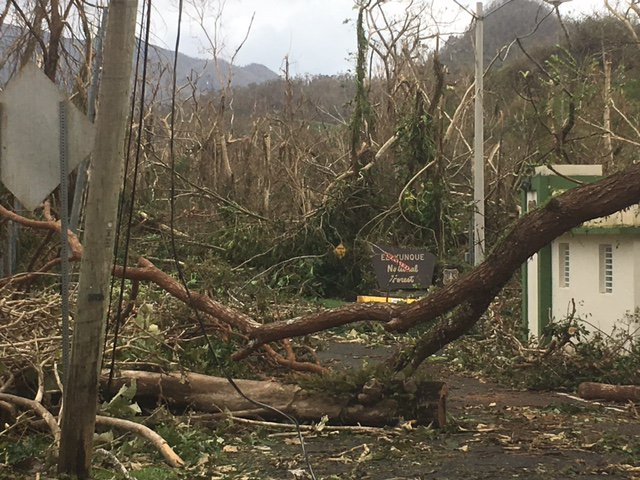 Photo: Trees downed in front of El Yunque National Forest sign. Sign has closed sign hung across it.