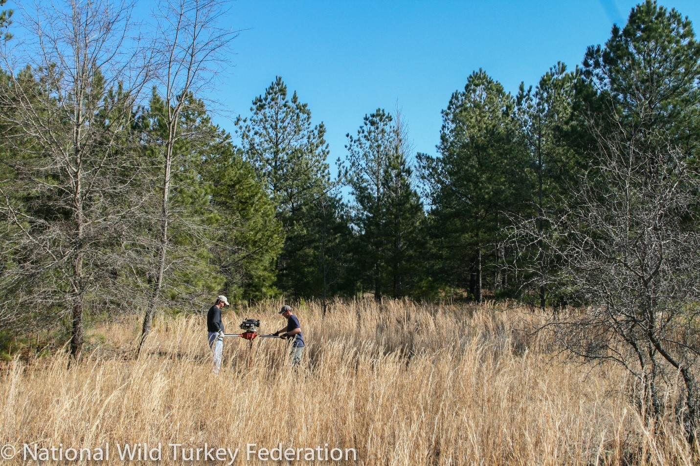 A photo of Field work for habitat improvement for the Eastern Wild Turkey