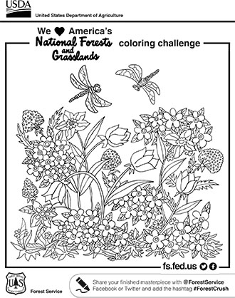 An illustration of a dragonfly and flowers coloring page